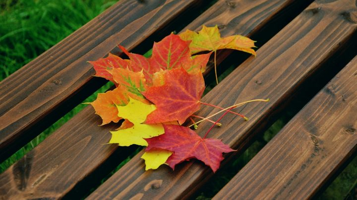 Change - Fall Leaves